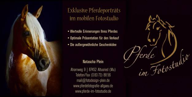 Fotoshooting Pferd&Reiter